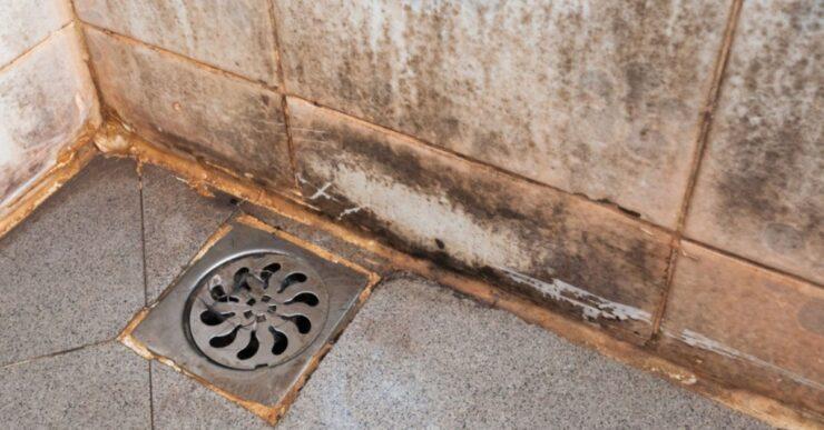 Calcare doccia Mammastobene.com