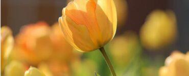 Nomi fiori Mammastobene.com