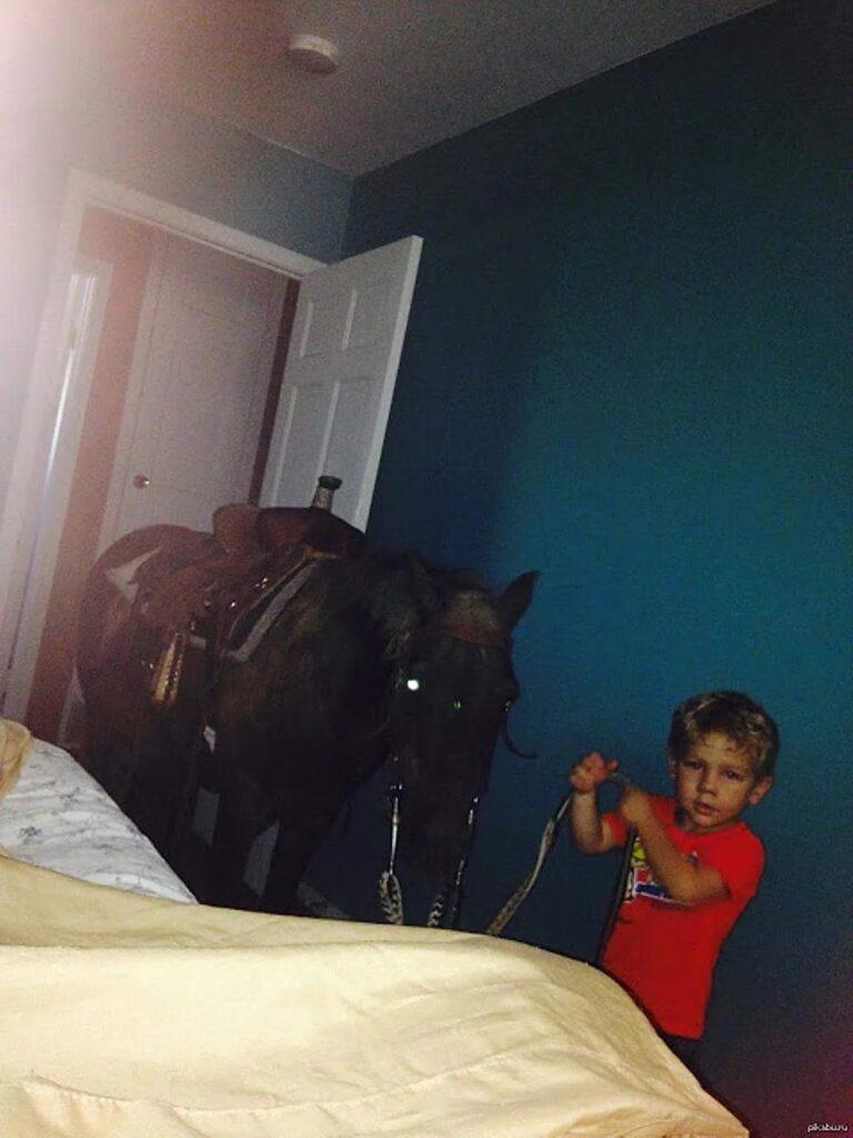 Perché i cavalli non sono animali domestici?