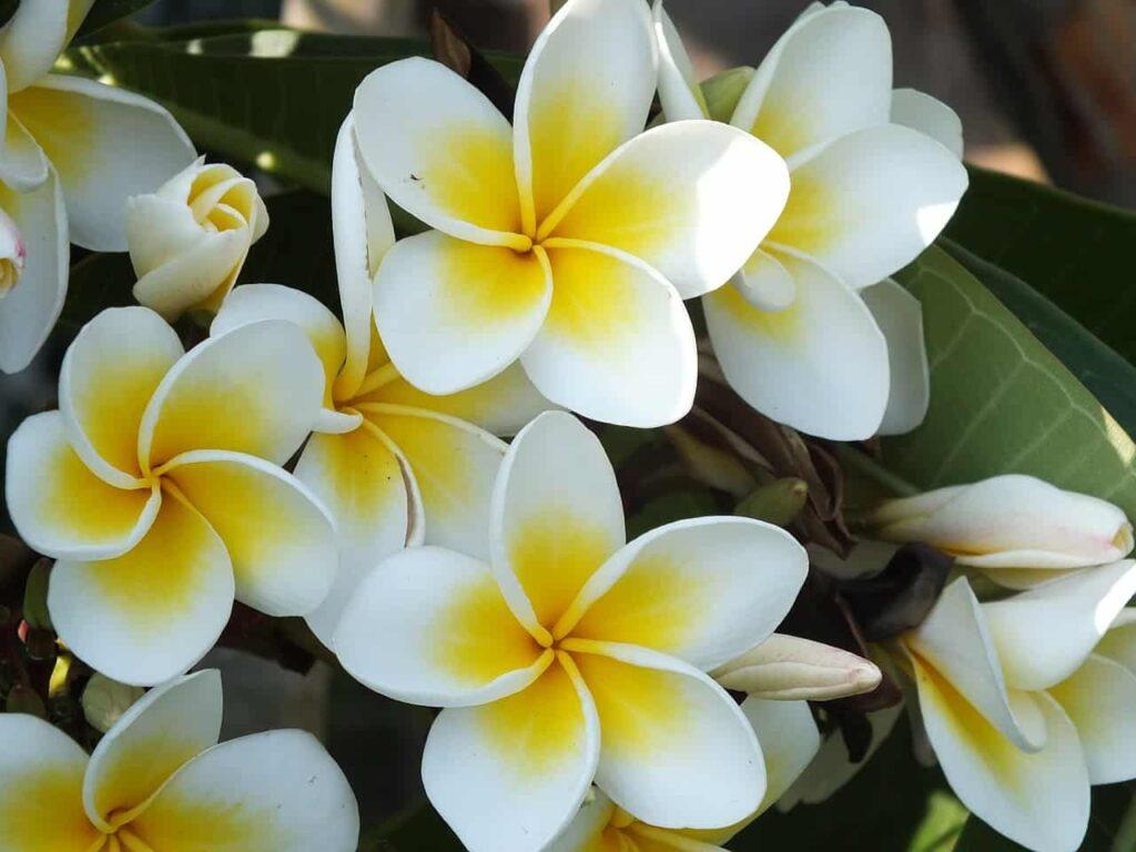 piante Mammastobene.com