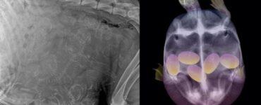 Radiografie animali Mammastobene.com