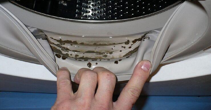 muffa lavatrice