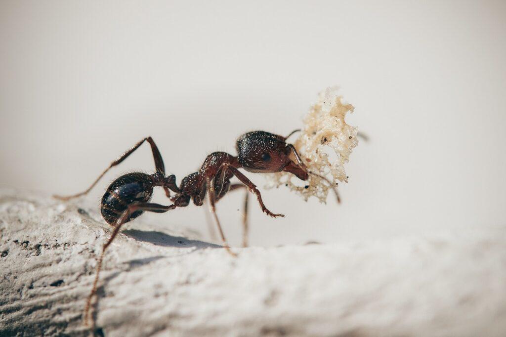 Rimedi per allontanare le formiche di casa