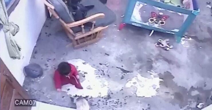 gatto impedisce a un bambino di avvicinarsi a scale