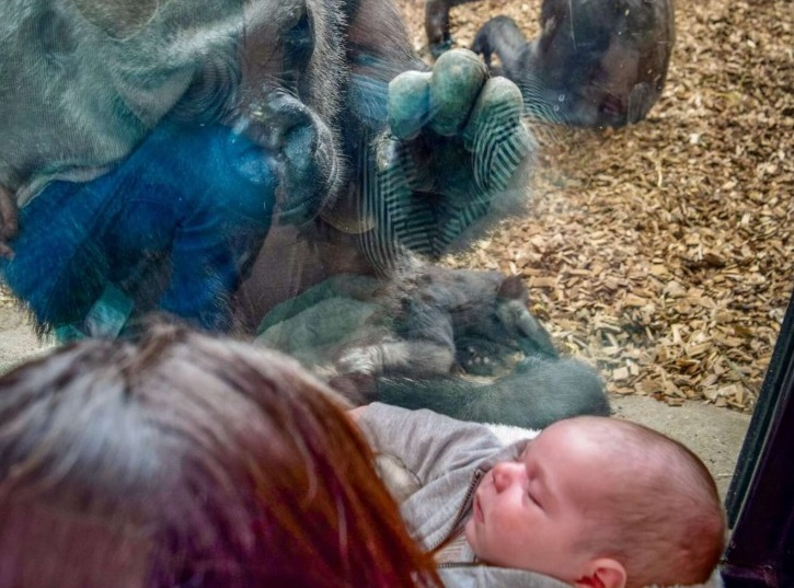 Incontro tra mamme allo zoo