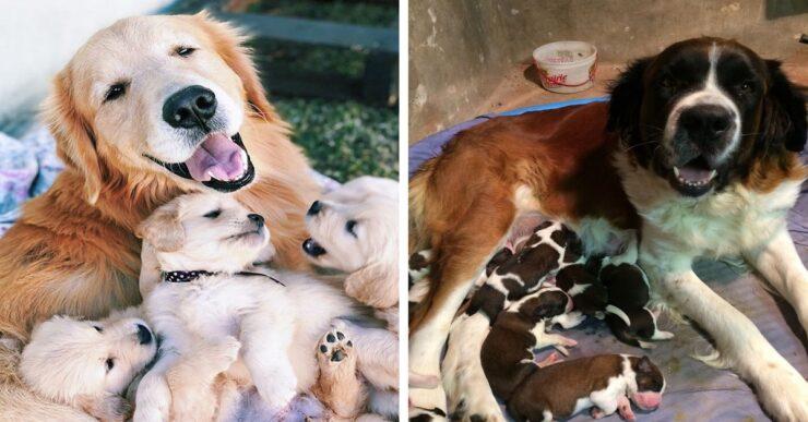 foto di dolcissime mamme cani