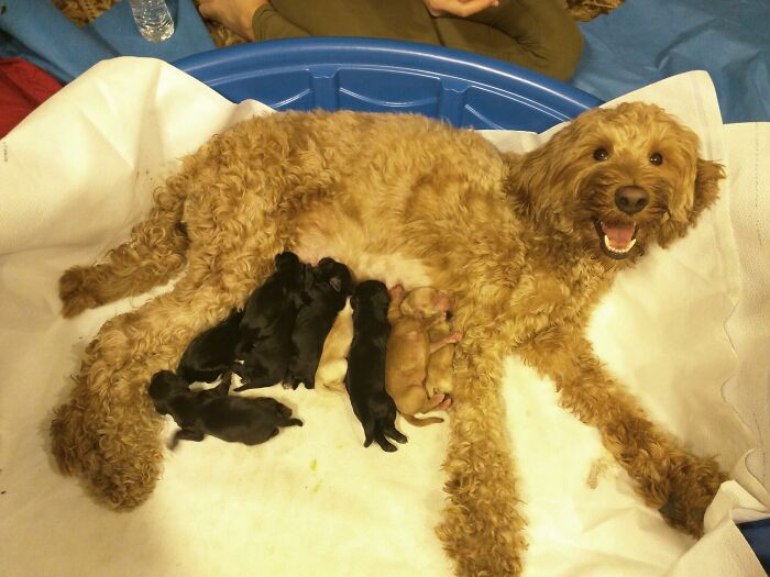 9 splendidi cuccioli