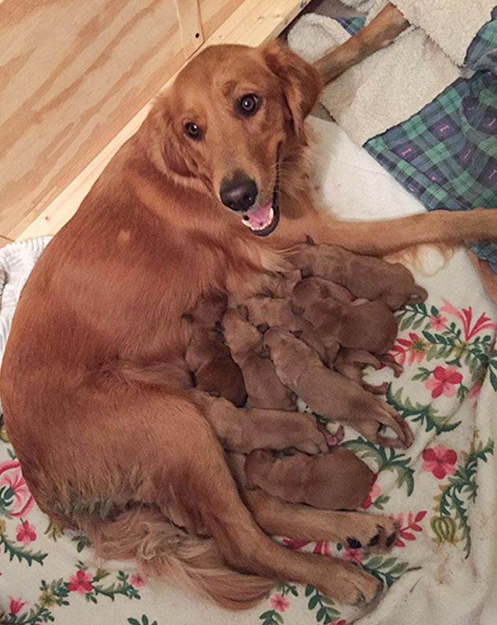 8 cuccioli e una mamma