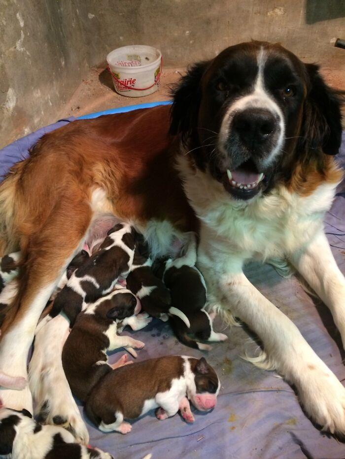 cuccioli nati tutti insieme