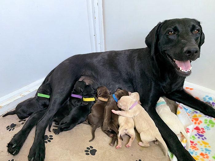 Ellie è un cane adottato