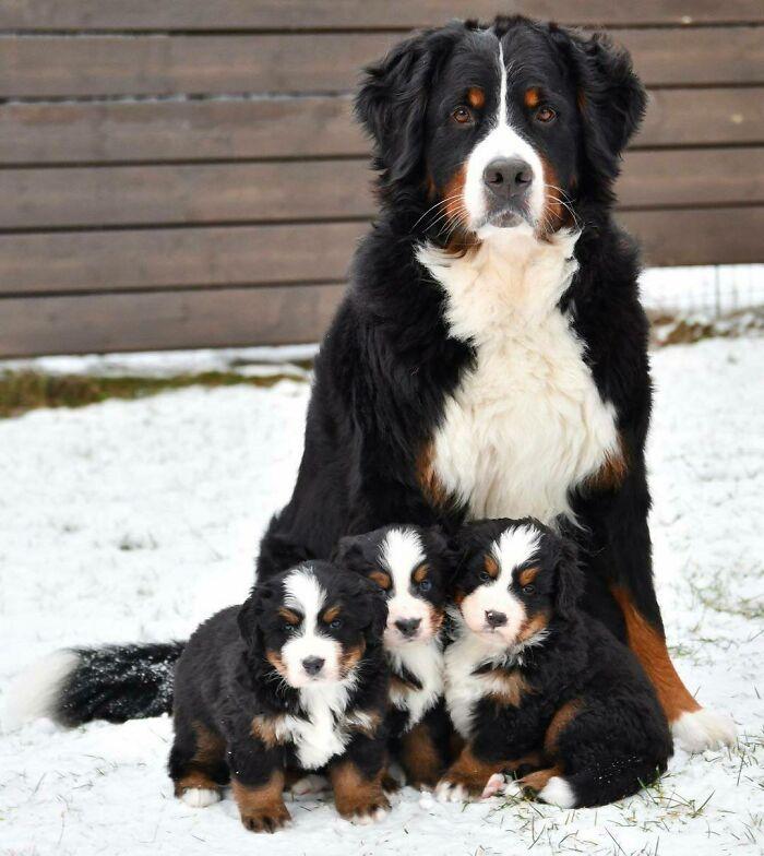 perfetta foto di famiglia