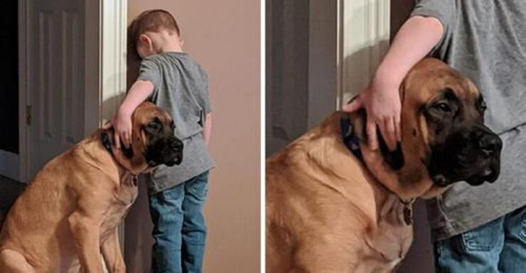 Cane in punizione