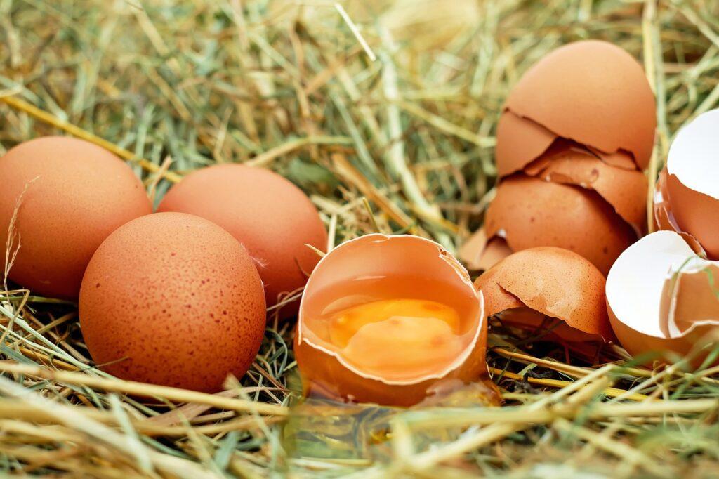 gusci di uova come fertilizzanti