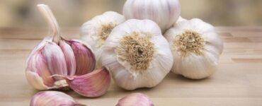 Alimenti che migliorano il sistema immunitario