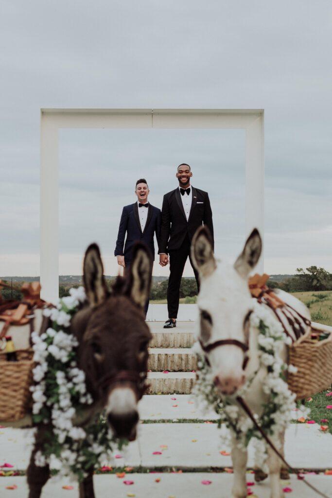 Asini a nozze