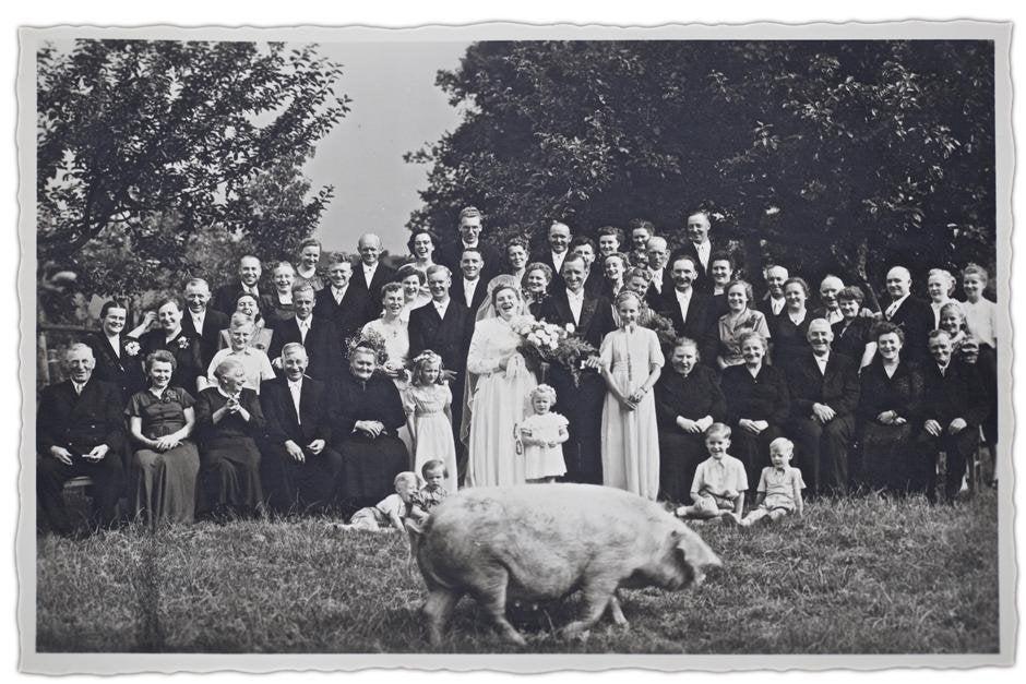 Il maiale a nozze