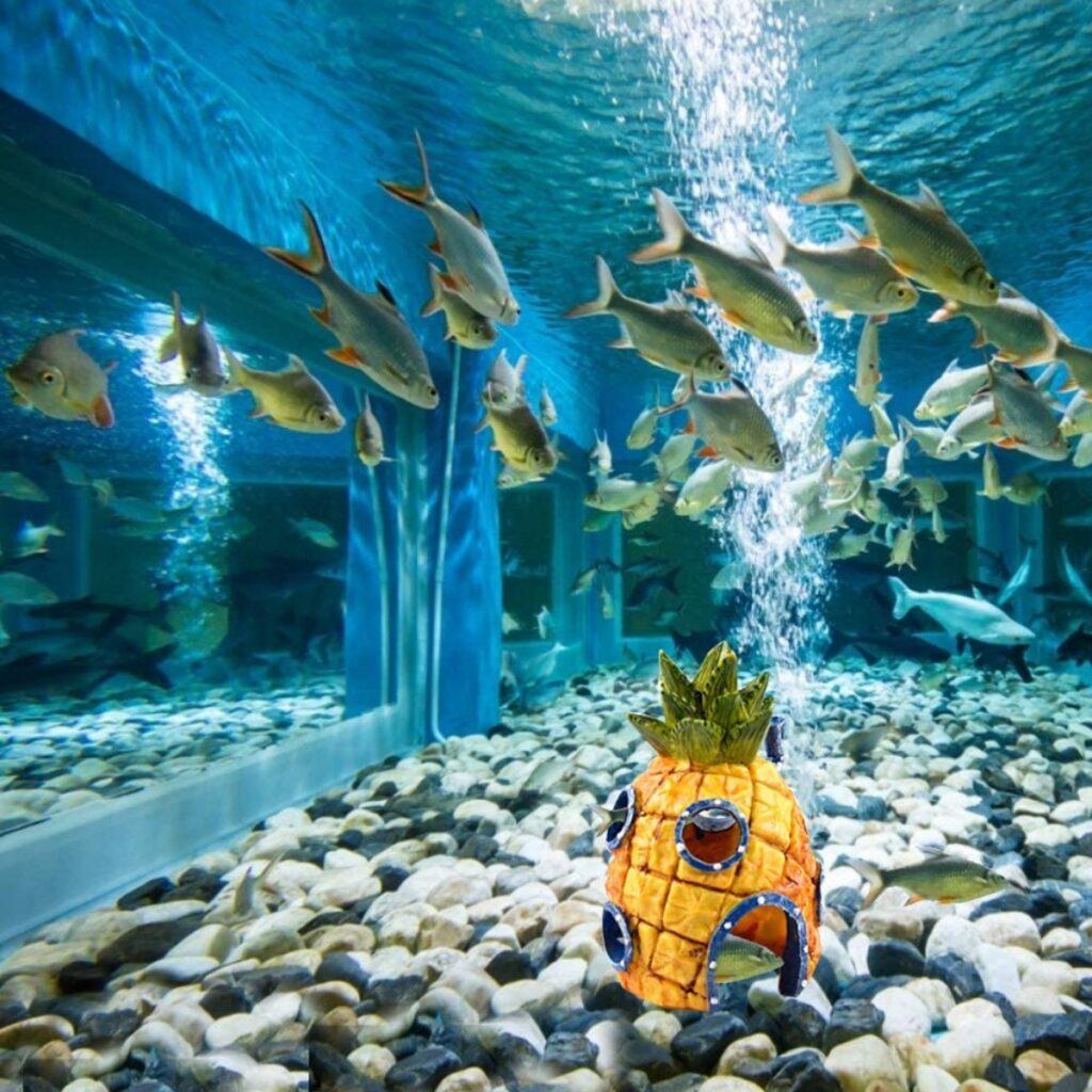 Decorazione per acquario