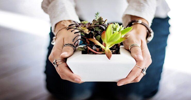 Come pulire l'aria di casa con le piante