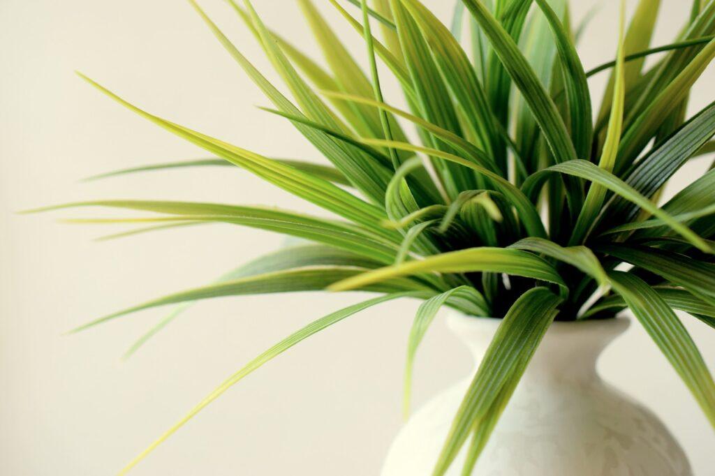 Quali piante rendono l'aria respirabile
